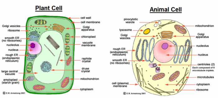 Longhorn Chart - The Cell