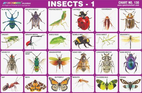 Longhorn charts : Insects [Approved]