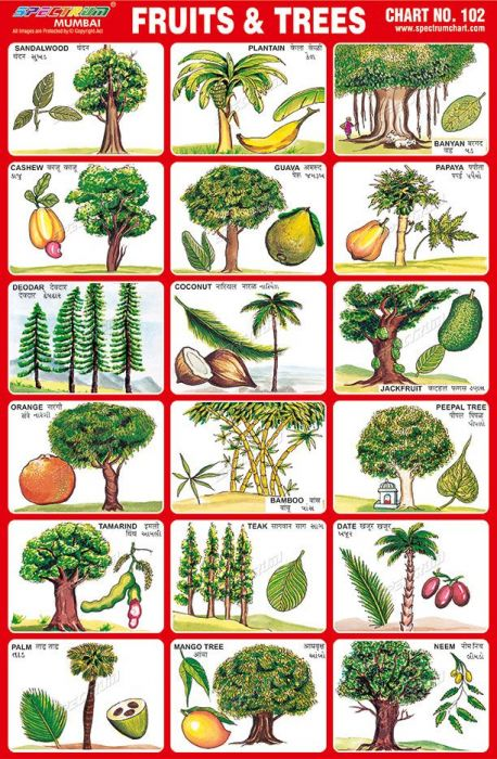 Longhorn charts: Fruit Trees [Approved]